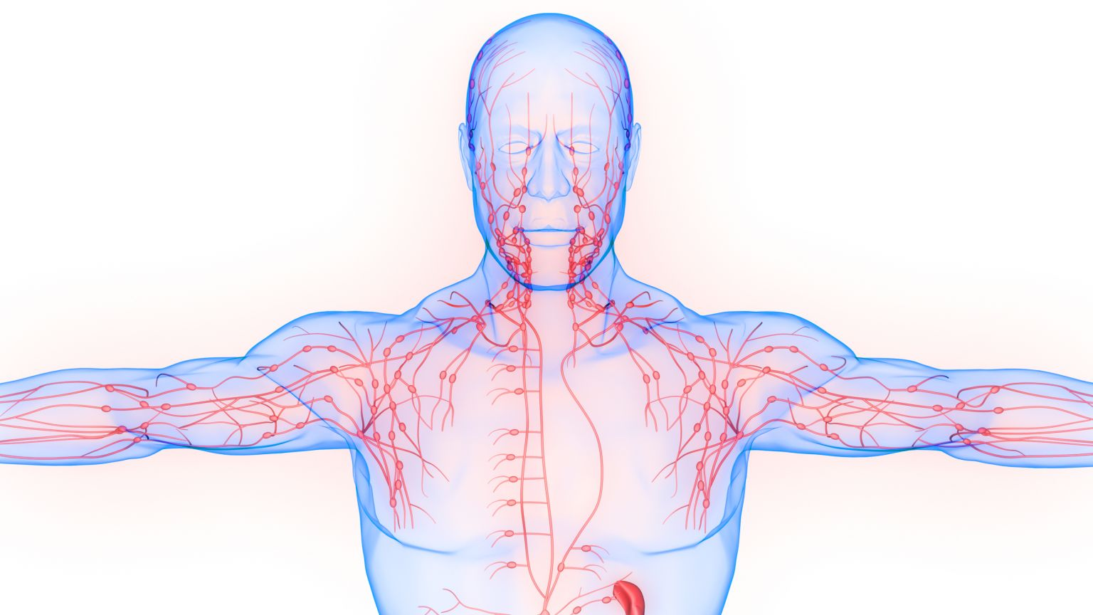Things that clog up the Lymph System